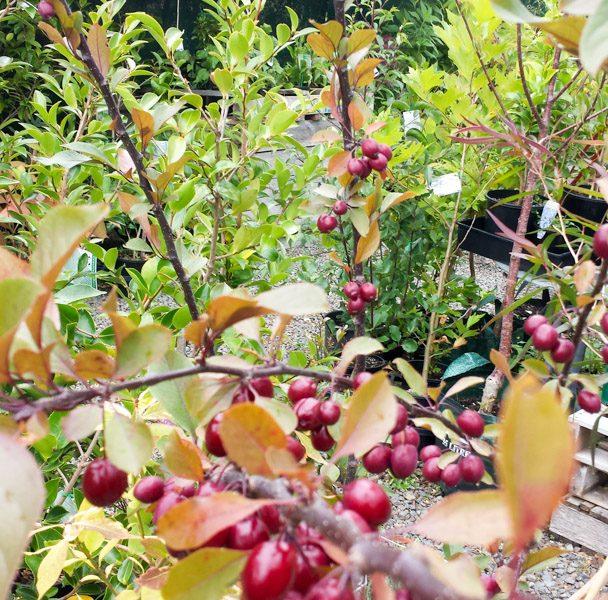 Julies Nursery-151227